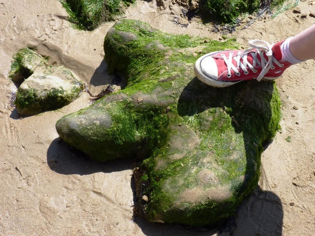 dinosaurfoot