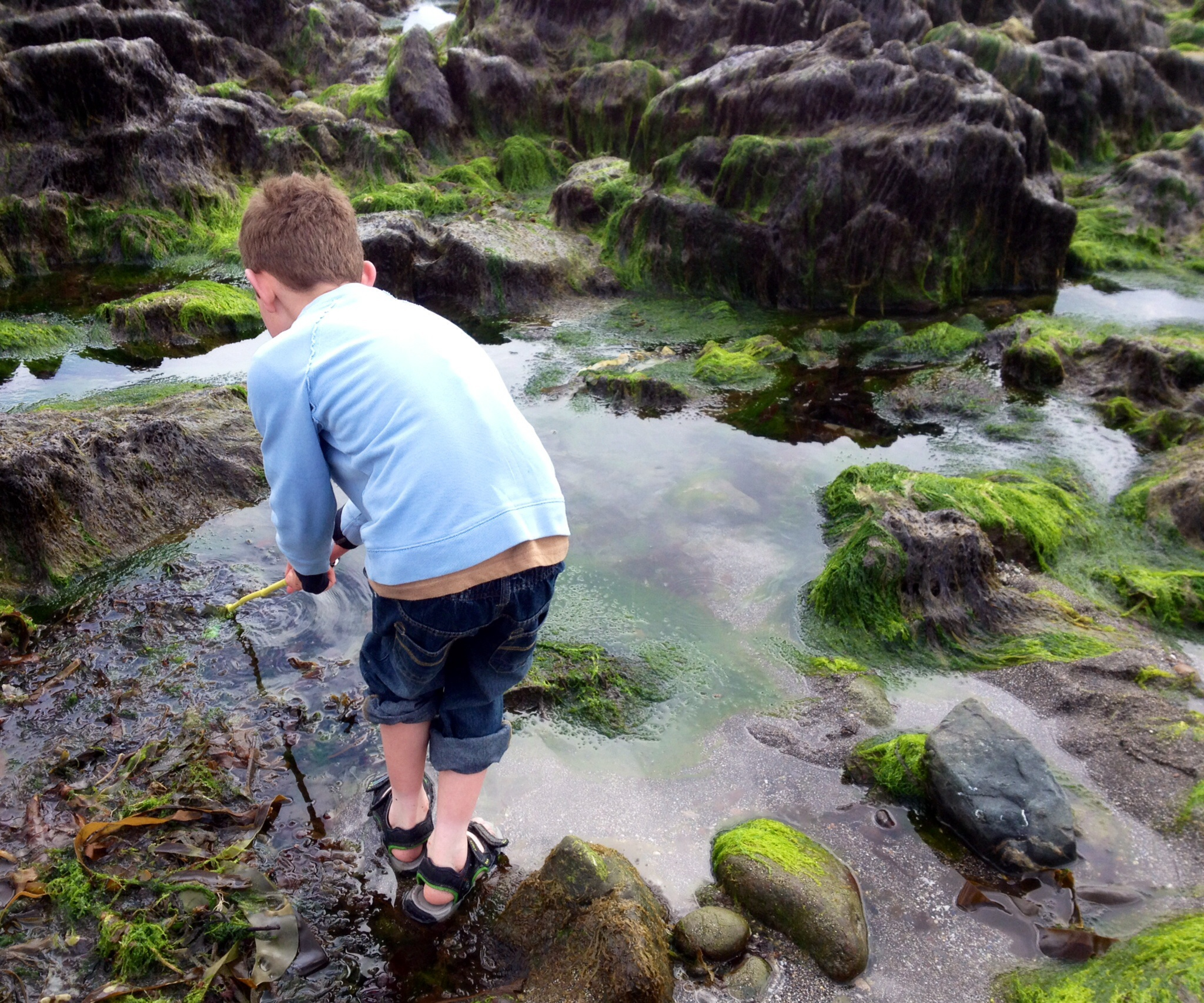 Rock pooling at Kennack Sands, Lizard Peninsula