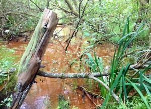 The 'Ferruginous swamp' at California Country Park
