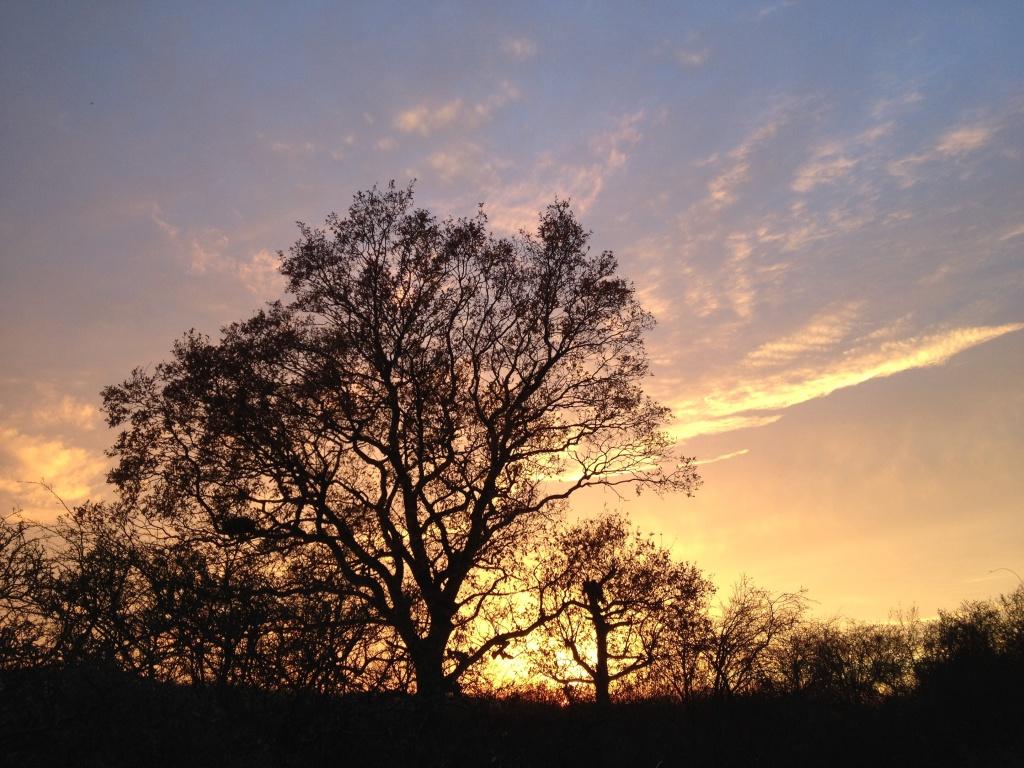 Otmoor_sunset2