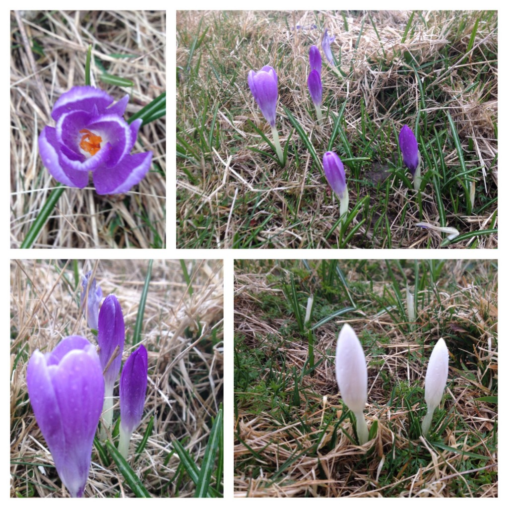 Inkpen Crocus Field Nature Reserve