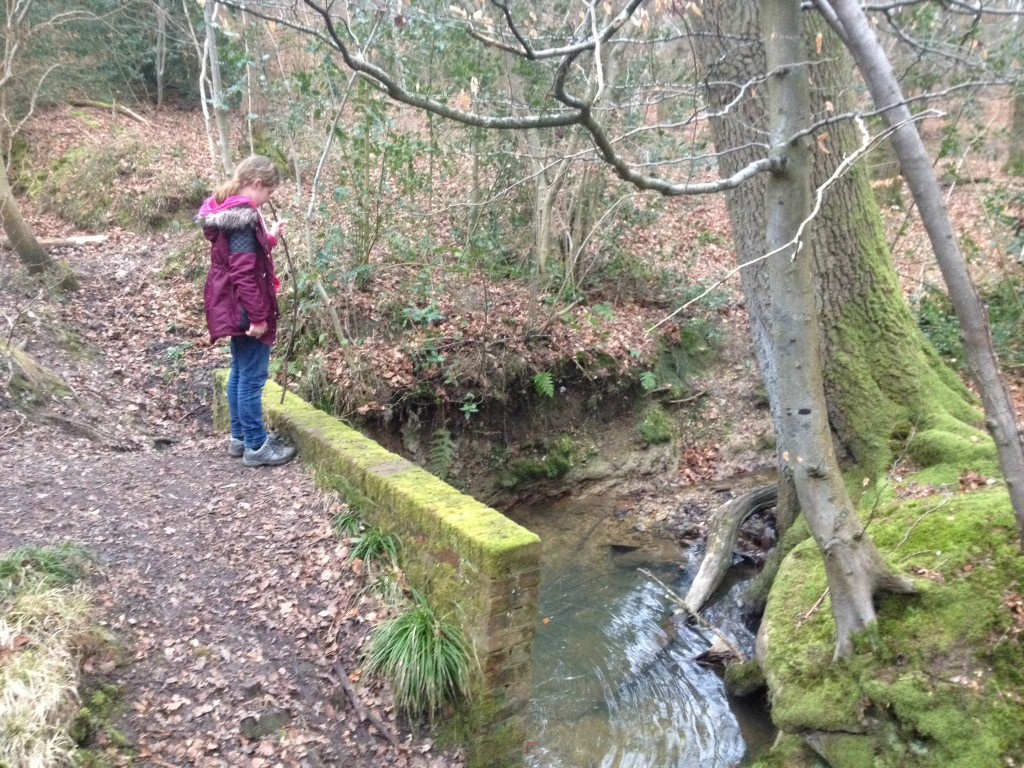 Pooh sticks in the wood