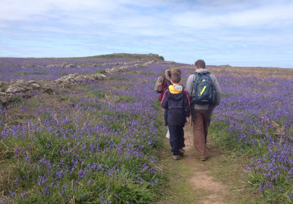 Walking through the bluebells, Skomer