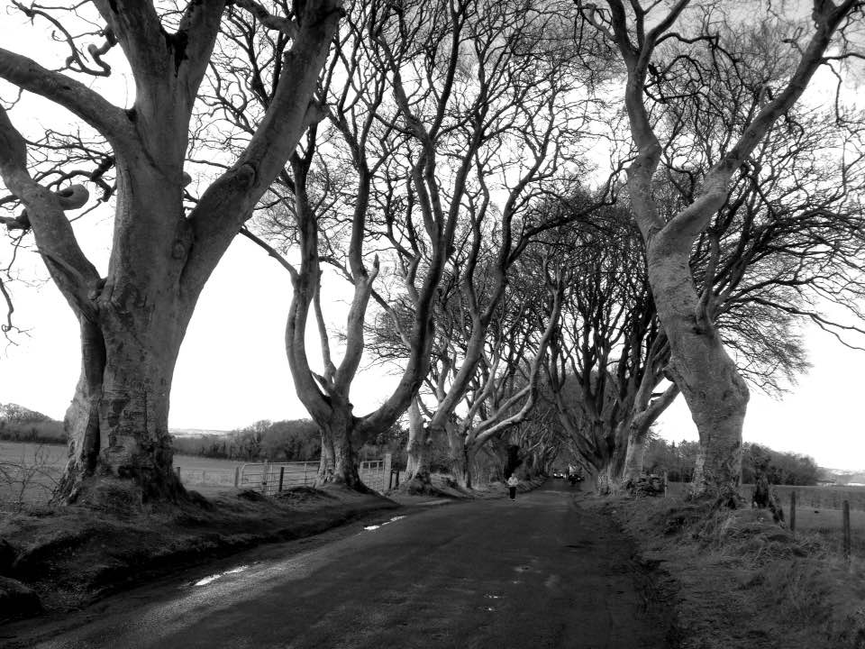 The Dark Hedges