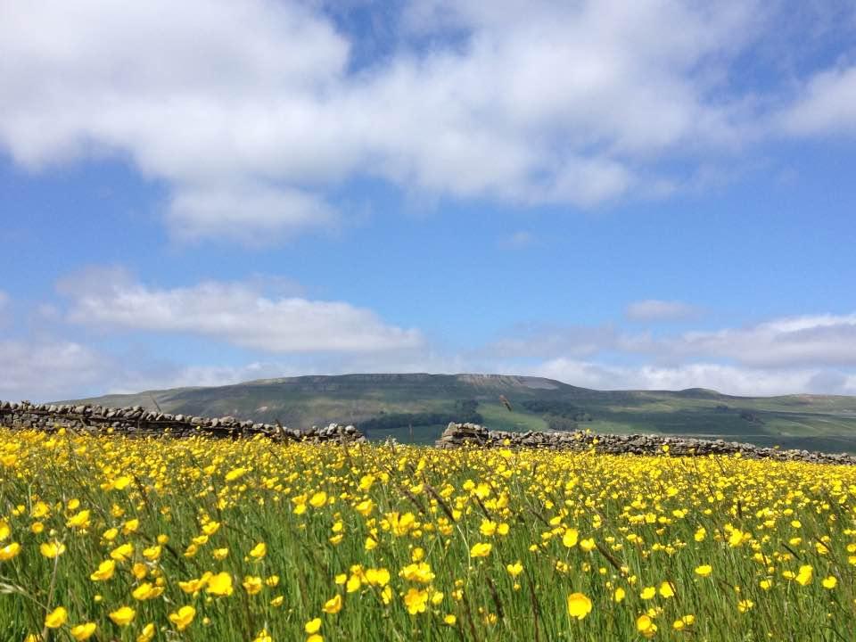 Wildflower meadow near Hawes, Yorkshire