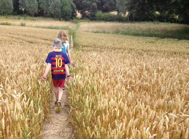 Walking through the wheat fields, near Silchester