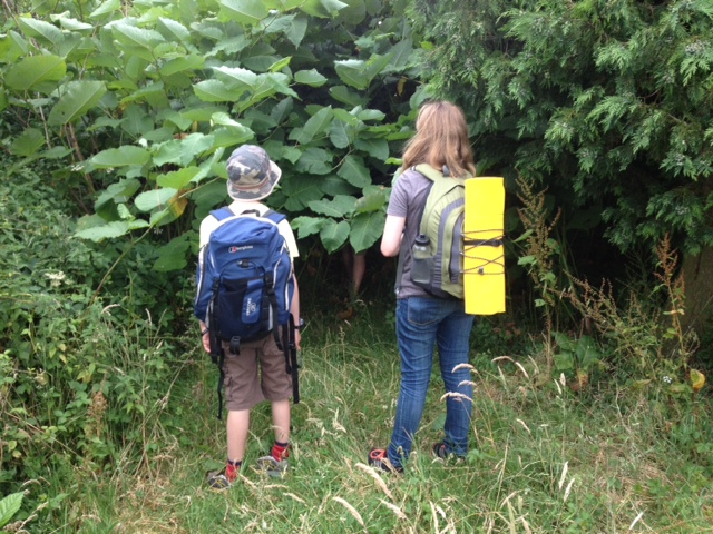Japanese knotweed footpath invasion!