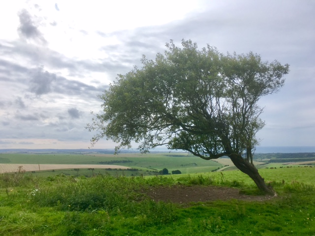 Wonder which way the winds blows on the South Downs Way?