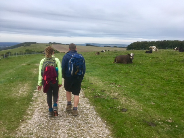 Braving cows on the South Downs Way