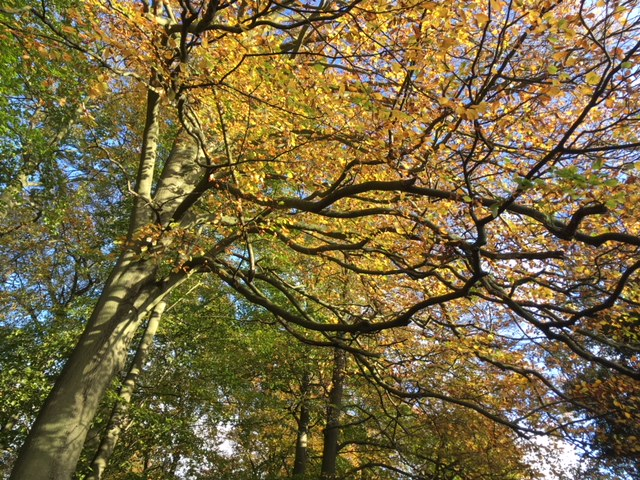 The Chilterns in autumn