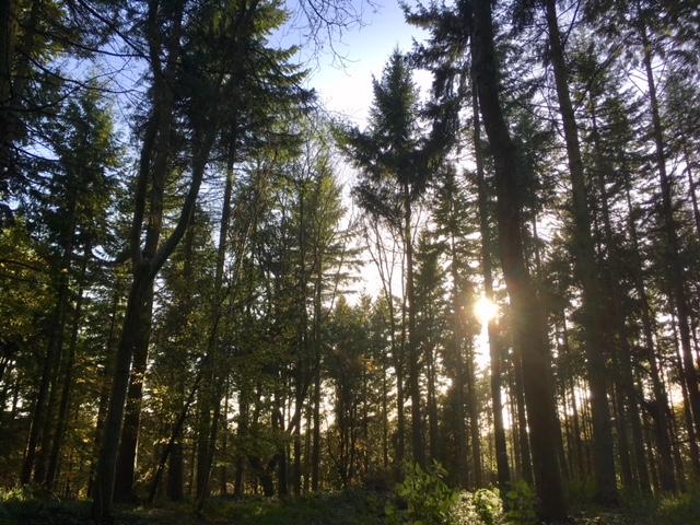 Park Wood, near Ibstone