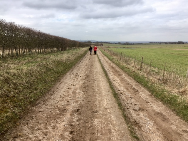 Chiltern Way, near Ewelme