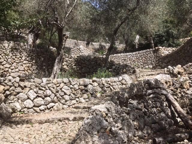 Olive groves, GR221