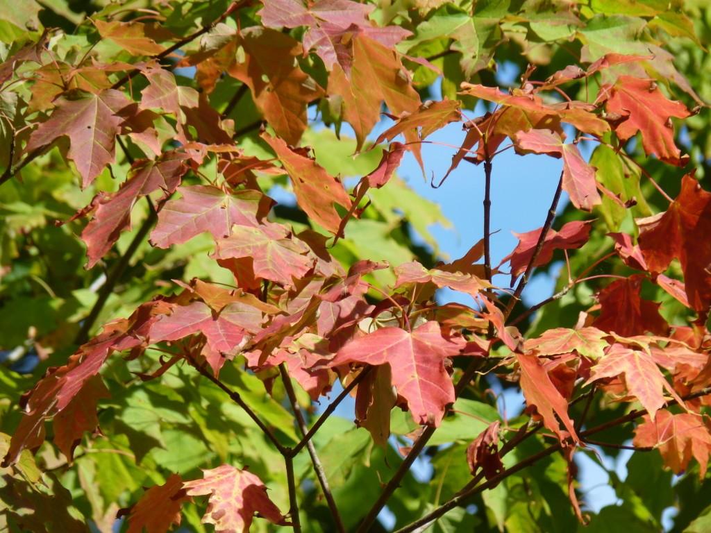 Autumn colours at Harcourt Arboretum