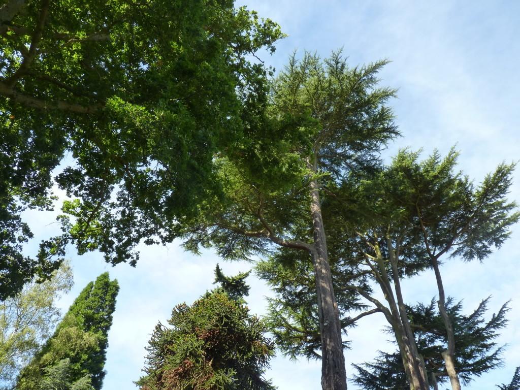 Trees at Harcourt Arboretum