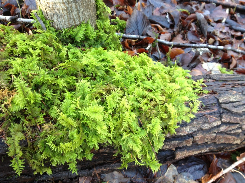 Moss at Warburg Nature Reserve