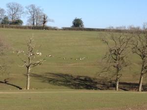 Deer on hillside at Bucklebury Farm Park