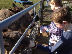 Feeding the donkeys at Bucklebury Farm Park