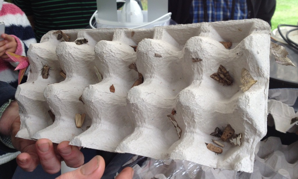 Inside the moth trap