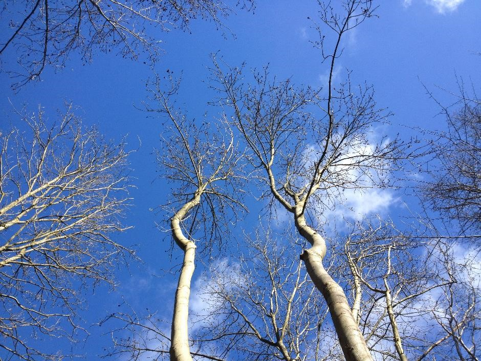 Looking up, Gunpowder Mills country park