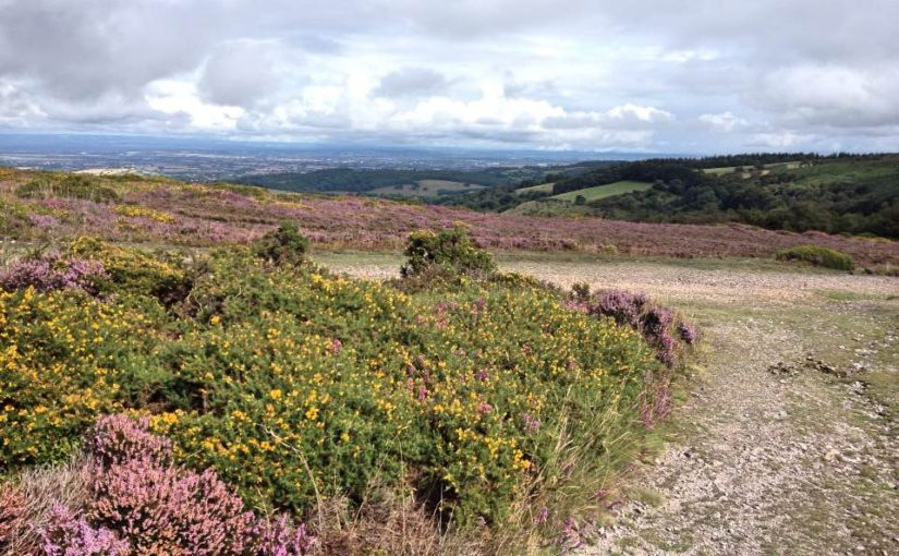 View from Lydeard Hill, Quantock Hills