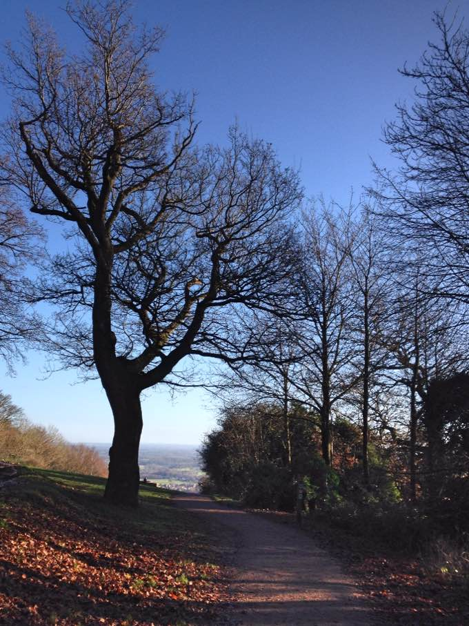 Footpath to Salomons Memorial, Box Hill