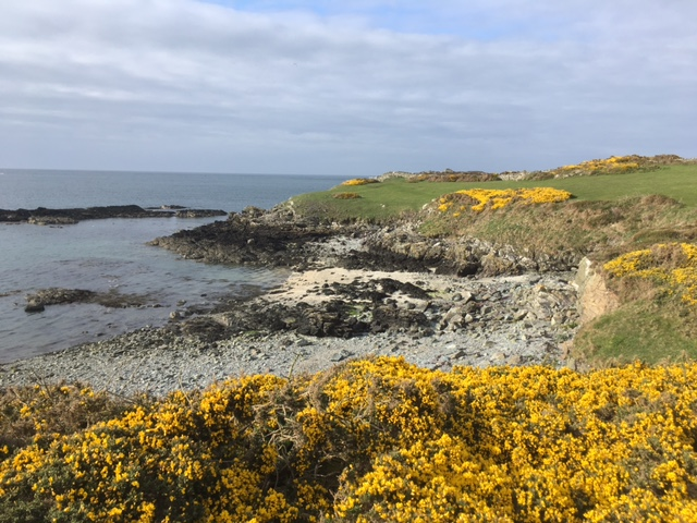 Anglesey coastal path near Cemlyn