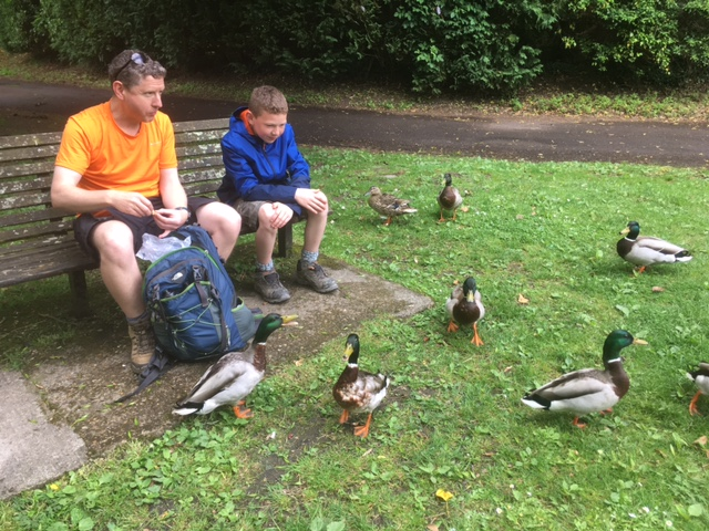 The ducks thought they'd get fed!