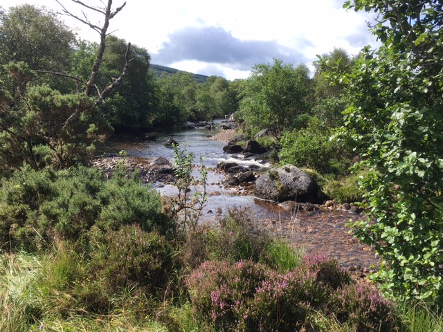Ariundle Trail, near Strontian