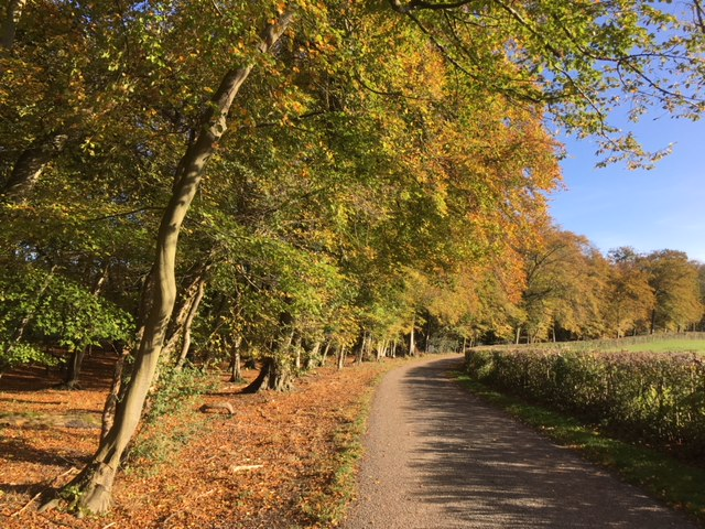 An autumn walk from Turville in the Chilterns, Bucks