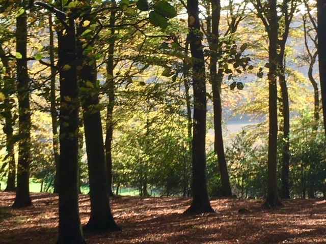 View through the trees, Park Wood, near Ibstone