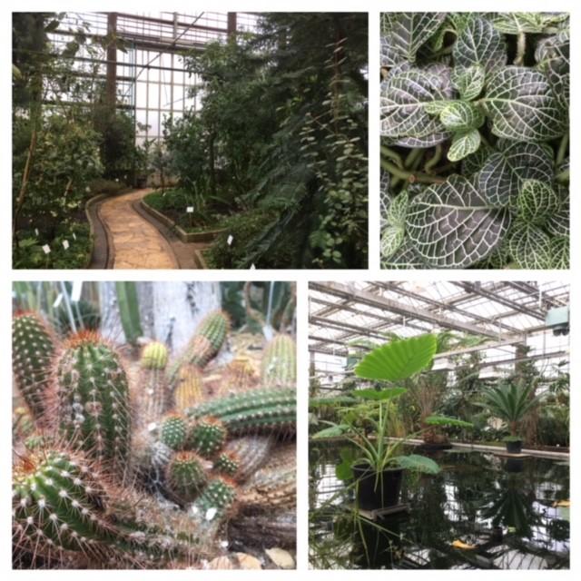 Botanic garden, Ghent