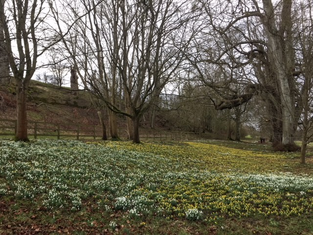 Snowdrops and celandines at Welford Park