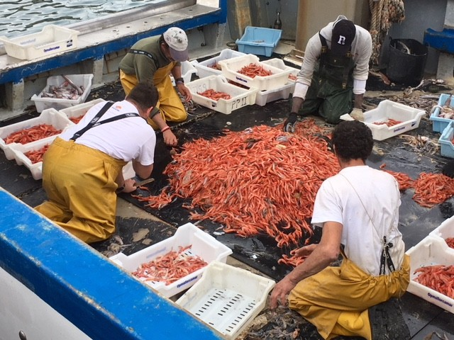 Sorting the catch, Port Soller