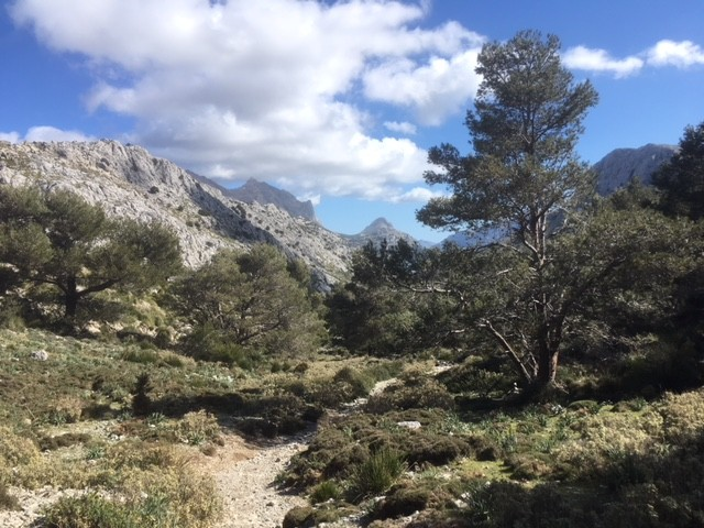 Descent from Coll de L'Ofre