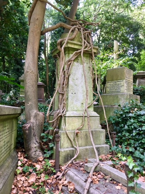 Nature taking over, Highgate cemetery