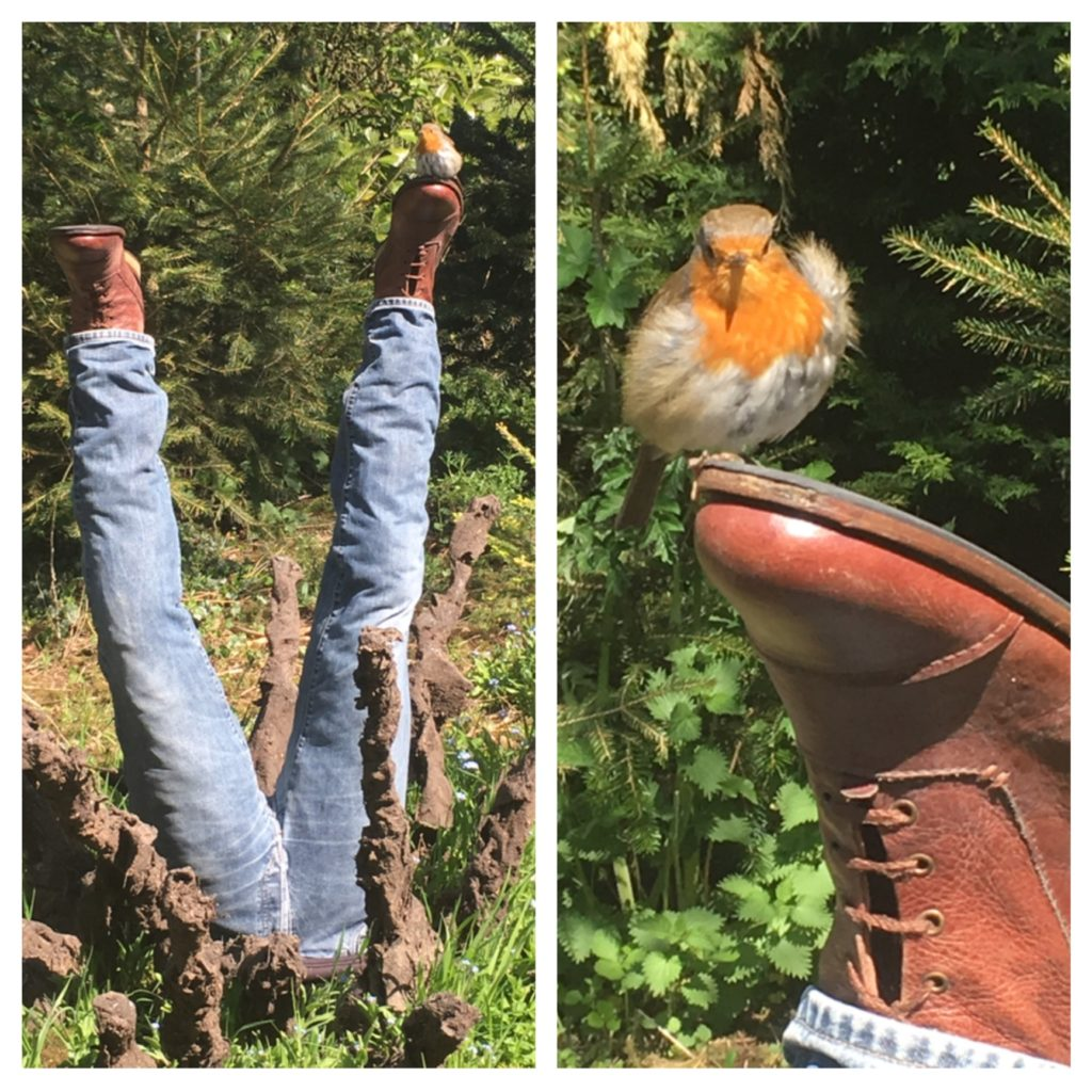 Cotswold Sculpture Trail - with added robin