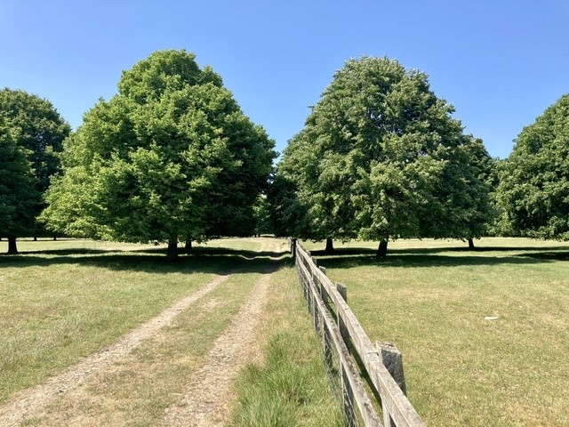 Blenheim Palace parkland