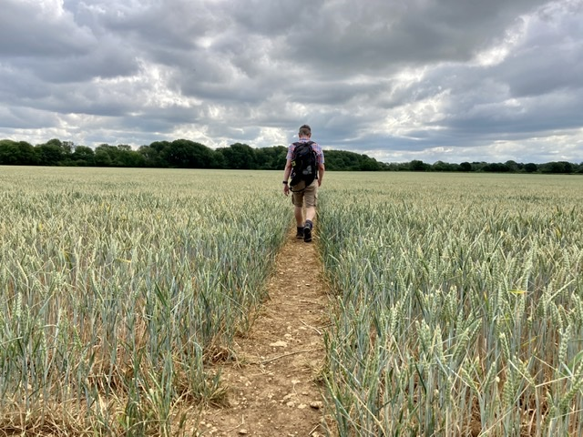 Day 4 on the Oxfordshire Way. One of many fields!