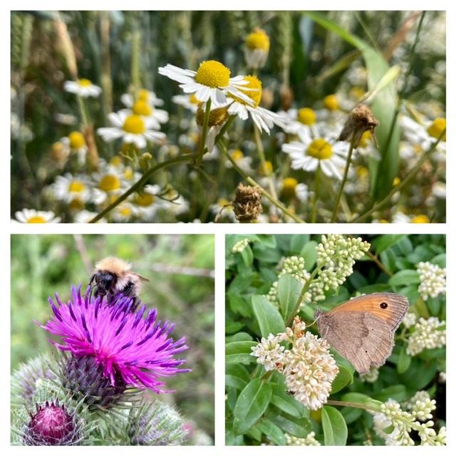 Oxfordshire Way flowers