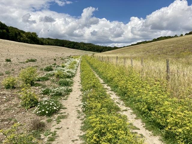 Walking to Pishill